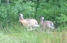 chasing rabbits 2
