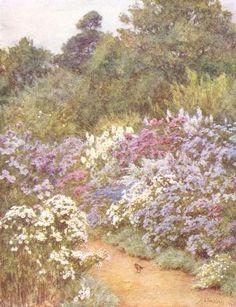 Michaelmas Daisies ~  Helen Allingham (English 1848-1926)