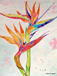 BIRD OF PARADISE Flower 5x7 original watercolor by carterdealejos