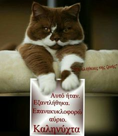 Good Night, Cats And Kittens, Minions, Funny, Cute, Animals, Gifs, Frames, Good Night Msg