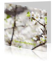 #Moderne #condoleance #kaart met een #prachtige #afbeelding van een #witte #bloesem #boom. Wist u dat u kunt alle #ontwerpen naar uw zin kunt #aanpassen? U kunt ook #eigenfoto's toevoegen, items weglaten, kleuren aanpassen... We denken graag met u mee. Mailt of belt u ons voor persoonlijk advies via info@daglief.nl of 010 511 33 40 (tijdens kantooruren).