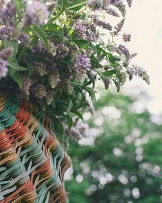 """Pleasure is the flower that passes; remembrance, the lasting perfume"".- #JeandeBoufflers  memories basket  #zaslavl #homeland #motherland #motherlandbelarus #беларусь #заславль #маярадзiмабеларусь #радзiма #заслаўе #bokeh #iambokeh #lookslikefilm #createcommune #exploretocreate #лукошковоспоминаний #дедушкинолукошко #nikonnl #stellerstories"
