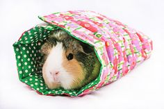 These roll ups are aussie made. They keep your guinea pig safe and warm AND they fold out as a lap pad! Too Cute! Baby Animals, Funny Animals, Cute Animals, Animal Funnies, Guinea Pig Care, Guinea Pigs, Guinea Pig Information, Guinea Pig Bedding, Pig Crafts