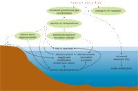 CSIRO - Marine Climate Impacts and Adaptation