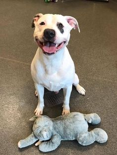 Sad Shelter Dog Just Learned He And His Elephant Are Going Home Together