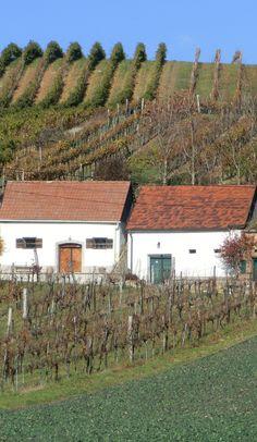 Kellergassen - das Wahrzeichen des Weinviertels - sollte jeder einmal erkundet haben ... Vineyard, Outdoor, Basement, Explore, Hiking, Wine, Landscape, Outdoors, Outdoor Games
