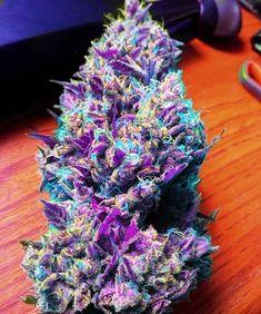 Marijuana nugs purple