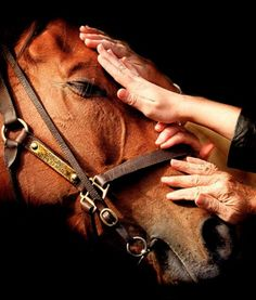 """""""The horse is God's gift to man"""". - Old Arab Proverb"""