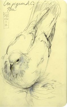 Ice Pigeon sketch at the Royal Winter Fair by Shannon Reynolds