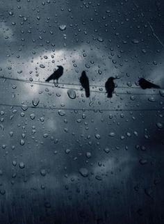 Trendy Dancing In The Rain Photography Water Drops I Love Rain, No Rain, Rain Bird, Walking In The Rain, Singing In The Rain, Rainy Night, Rainy Days, Water Drops, Rain Drops