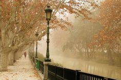 Street Lamps and Fog... I would love to walk there...