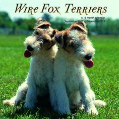 Wire Fox Terriers Wall Calendar: Wire Fox Terriers Wall Calendar: This 2013 wall calendar features a dozen images of the unique Wire Fox Terrier. The perfect gift for anyone who loves these wonderful dogs!  http://www.calendars.com/Fox-Terriers/Wire-Fox-Terriers-2013-Wall-Calendar-/prod201300001859/?categoryId=cat10105=cat10105#