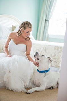 © Mark Dickinson #Photography Best #Dog #pitbull