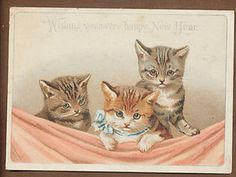 174 Best Art Of Helena Maguire Images Vintage Cat Cat