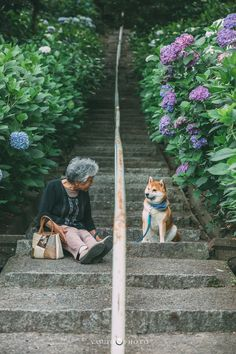 Series Of Heartwarming Pics Capture Womans Relationship With Her Shiba Inu - World's largest collection of cat memes and other animals Shiba Inu, Animals And Pets, Cute Animals, Japanese Dogs, Black Labs, Bull Terriers, Belle Photo, Cute Dogs, Dog Cat