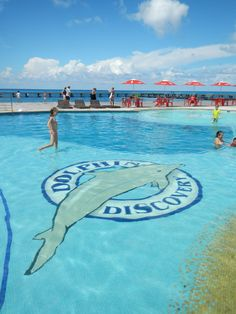 Frolic in the Dolphin Discovery pool after your play time with dolphins.
