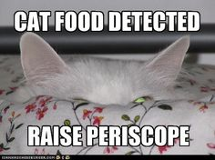 Funny Cat Pictures With Captions | funny pictures of cats with captions
