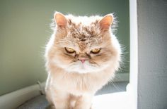 21 imagens que comprovam que gatos são superexpressivos