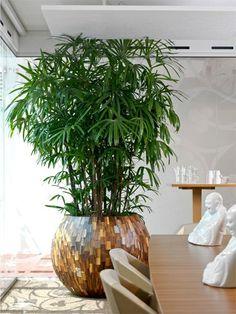 Leafy Plants, Big Plants, Patio Plants, Foliage Plants, Landscaping Plants, Outdoor Plants, House Plants Decor, Plant Decor, Indoor Plant Pots