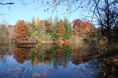 Fall splender conservation land Columbia Mo.  Photo by Rachael Irvine, Irvine's Place Photography