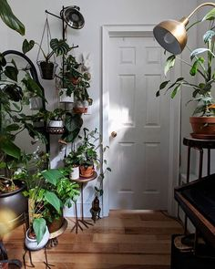 Finally, just enough light. ✨ - Anticipatory answers: footed table and planter I got a couple of years ago; definitely out of stock now but you never know what you'll find if you Google. Wall plant hanger is really a towel rack with swinging arms;...