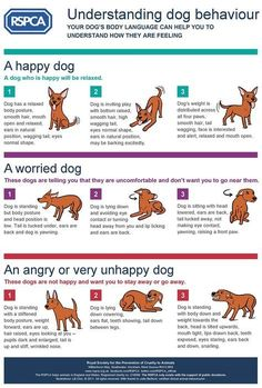 What Is Your Dog Trying To Tell You? Amazing Stuff! | The WHOot