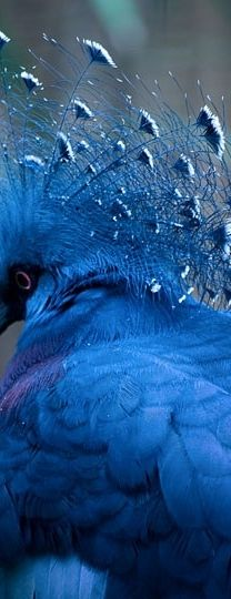 ... Je suis ivre d'avoir bu tout l'univers ... (Apollinaire) BLUE ANIMALS : More at FOSTERGINGER @ Pinterest