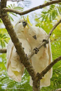 Love birds by glenn bemont on 500px