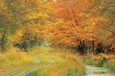 Herbstlicher Wald auf Fischland Darß Zingst (Foto: Uwe Engler)