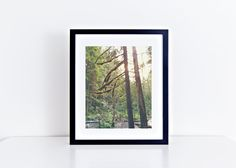"New to LemonBranch on Etsy: Portland Oregon Columbia River Gorge Forest and Trees with Sun Flare 8"" x 10"" Fine Art Photography Wall Art Decor (22.00 USD)"