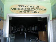 Belle Isle Aquarium on Belle Isle in Detroit, Michigan is America's oldest aquarium, founded in 1904.
