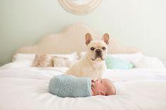 French bulldog with newborn. Wendy Kovac Photography