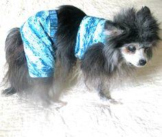 Small Dog Swim Trunks/Harness Set  Cotton by BloomingtailsDogDuds, $25.95