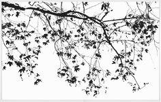 Elysian Tree Study | Natural Curiosities