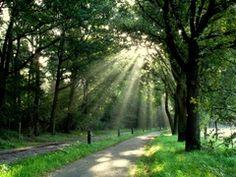 Veel zonnestralen in het bos door de nevel, die er nog hangt.  #buienradar
