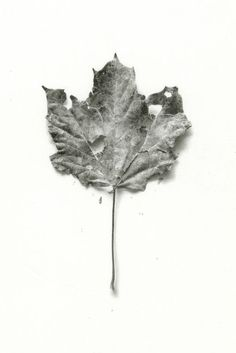 Check out the detail in this amazing January Leaf by Patrick Kramer - just gorgeous!