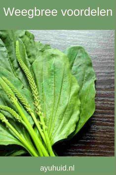 Healthy Herbs, Healthy Life, Herb Recipes, Herbal Medicine, Natural Living, Natural Healing, Natural Remedies, Health Tips, Herbalism