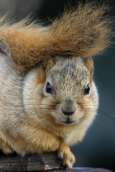 Squirrel by James Marvin Phelps