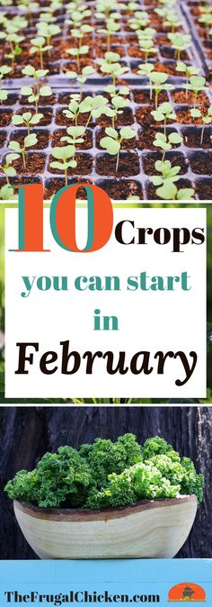 It's not quite spring yet. but you're ready for gardening season right? It's not quite spring yet. but you're ready for gardening season right? Here's 10 crops you can start from seed in February to scratch the itch! Indoor Vegetable Gardening, Organic Gardening Tips, Container Gardening, Garden Plants, Kitchen Gardening, Spring Vegetable Garden, Garden Compost, Potager Garden, Gardening Vegetables