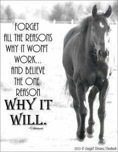 Positive quotes about strength, and motivational Equine Quotes, Equestrian Quotes, Great Quotes, Quotes To Live By, Me Quotes, Qoutes, Rodeo Quotes, Racing Quotes, Inspirational Horse Quotes