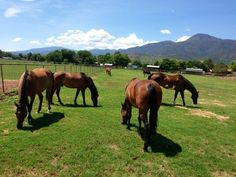 Our herd getting their well-deserved break at pasture for the summer!