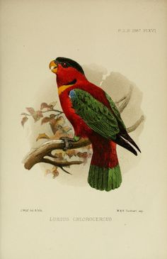 1867 - Proceedings of the Zoological Society of London. - Biodiversity Heritage Library