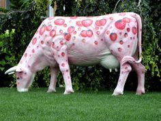 A pink cow. I want one! ;)
