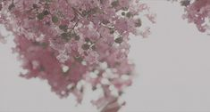 everyday a different color, beautiful gifs, soft goth, nature. images that I like and attract my attention. I hope you'll find images here for your taste too. Pale Aesthetic, Aesthetic Gif, Aesthetic Photo, Flower Aesthetic, Wattpad, Gifs, Cinemagraph, Gif Animé, Story Inspiration
