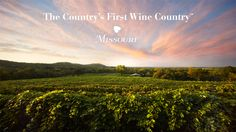 Missouri Wine and Grape Board Campaign: The Country's First Wine Country Snoring Solutions, Growing Grapes, Wine Country, Missouri, Vineyard, Campaign, Board, Places, Outdoor