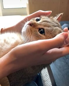 Cute Little Kittens, Cute Baby Cats, Cute Little Animals, Kittens Cutest, Funny Cute Cats, Cute Cat Gif, Cute Funny Animals, Cute Animal Videos, Funny Animal Pictures