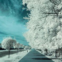 Infrared by Costin Mugurel on 500px