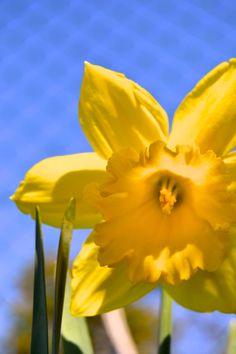 #flower #sunday #bluesky