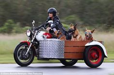 http://ift.tt/2v5JDY4 Goggle Doggies in Motorcycle Sidecar
