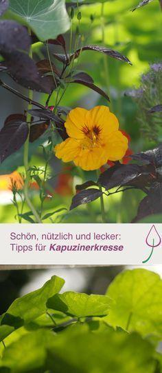 Kapuzinerkresse in Garten und auf dem Balkon. Tipps zum Anbauen, Pflege, Deko, Rankhilfe und Pflanzen.